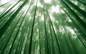 Bamboo-Forest-Wallpaper-HD-